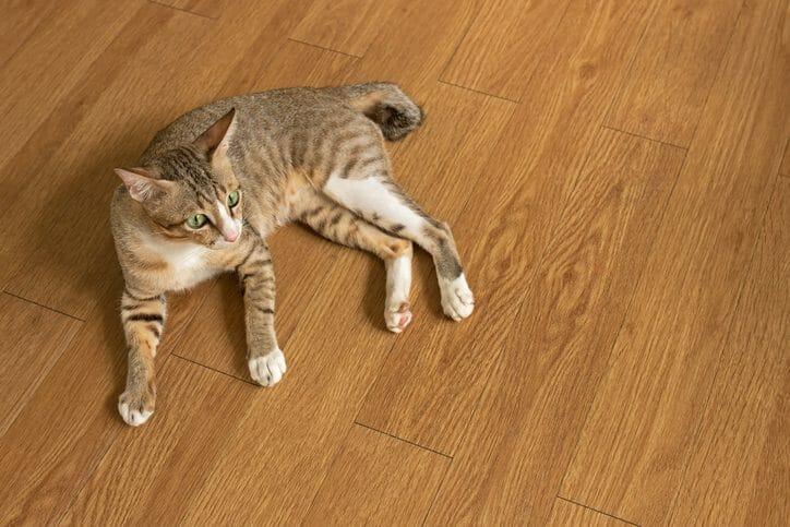 無垢材の床のメリット・デメリットは?