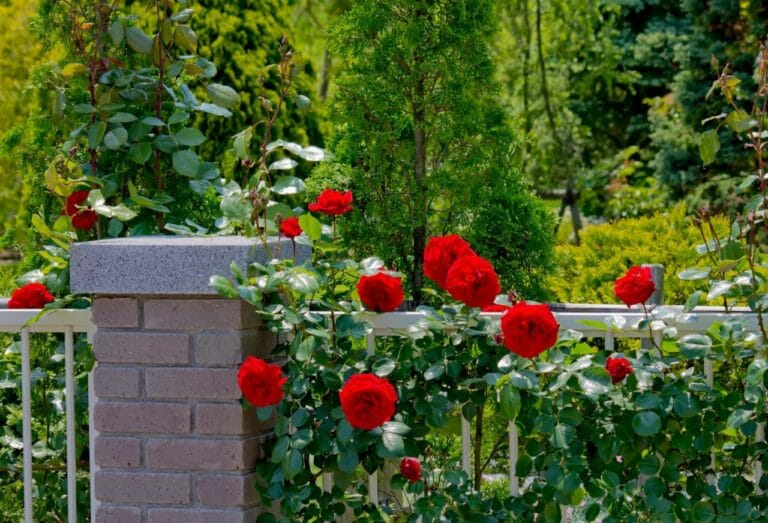 市川市で庭のリフォームが評判の会社と施工事例を紹介!