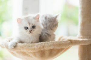 猫のためにリフォーム!快適な空間を作る費用や工夫について紹介します