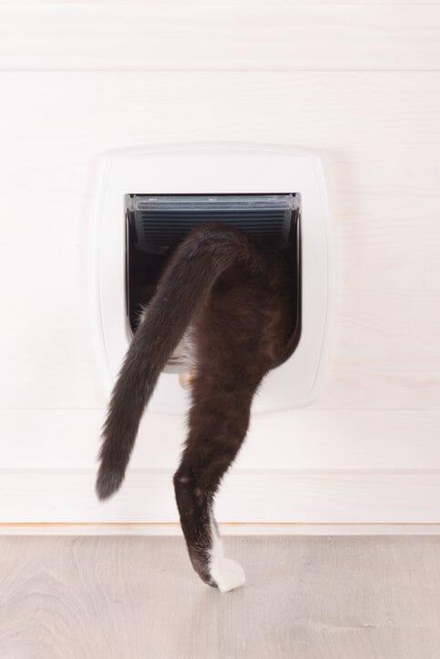 ペットのためにドアを取り付ける費用は?おすすめの場所を紹介します