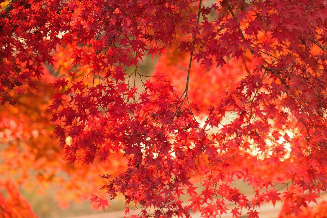 リフォームするなら秋がチャンス!おすすめのリフォームをご紹介します
