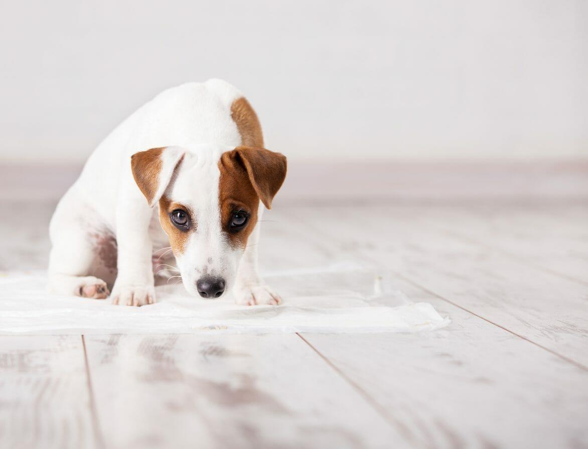 ペットと暮らしたい方必見!リフォームにかかる費用とポイントについて解説します
