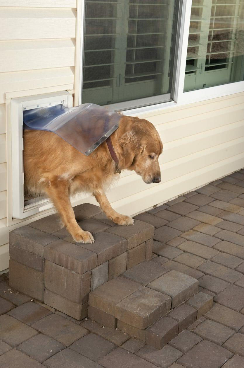 ペットのためにドアを取り付ける費用は?おすすめの場所と種類紹介します