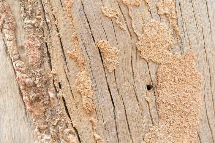 床に虫食いの穴!ヒラタキクイムシの被害による対処法&予防策とは?